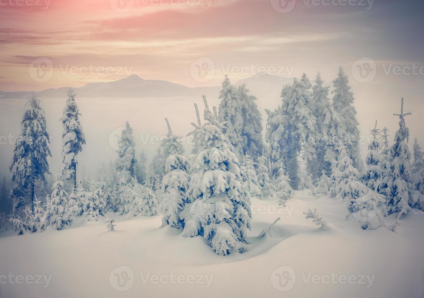 forêt brumeuse dans les montagnes d'hiver. photo