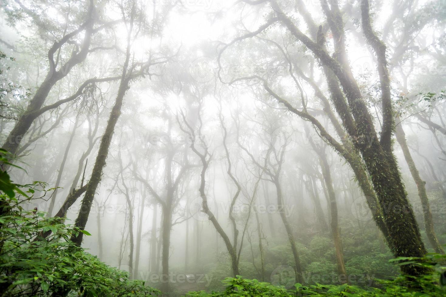 forêt d'arbres en saison d'automne de la Thaïlande photo
