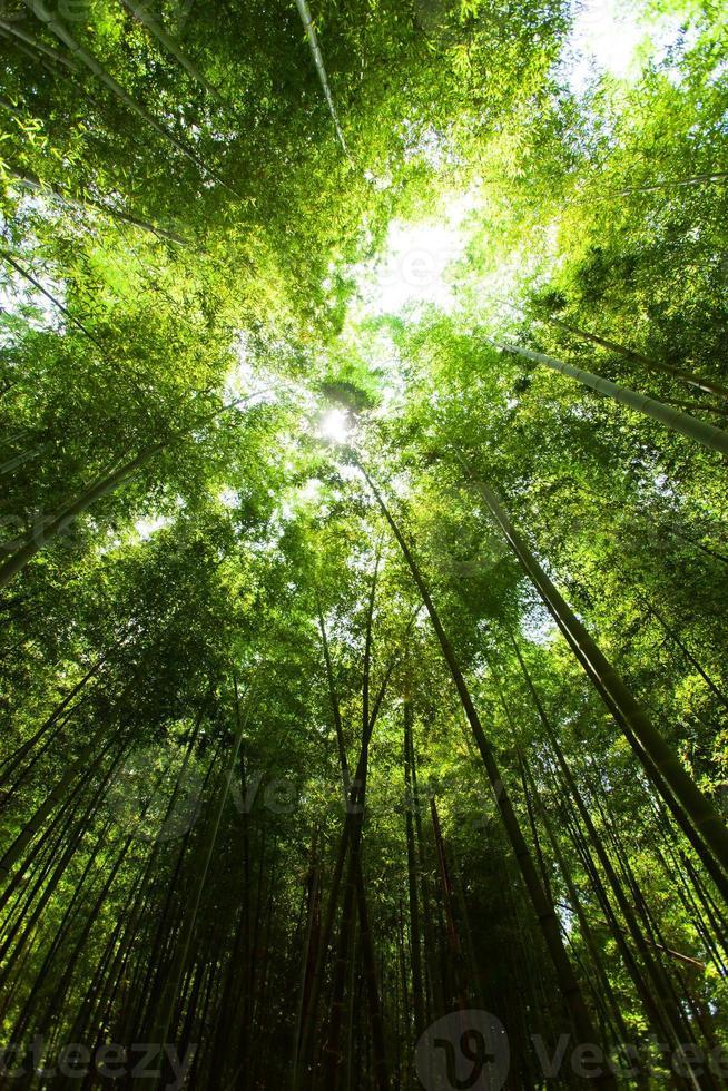 lumière dans la forêt de bambous photo