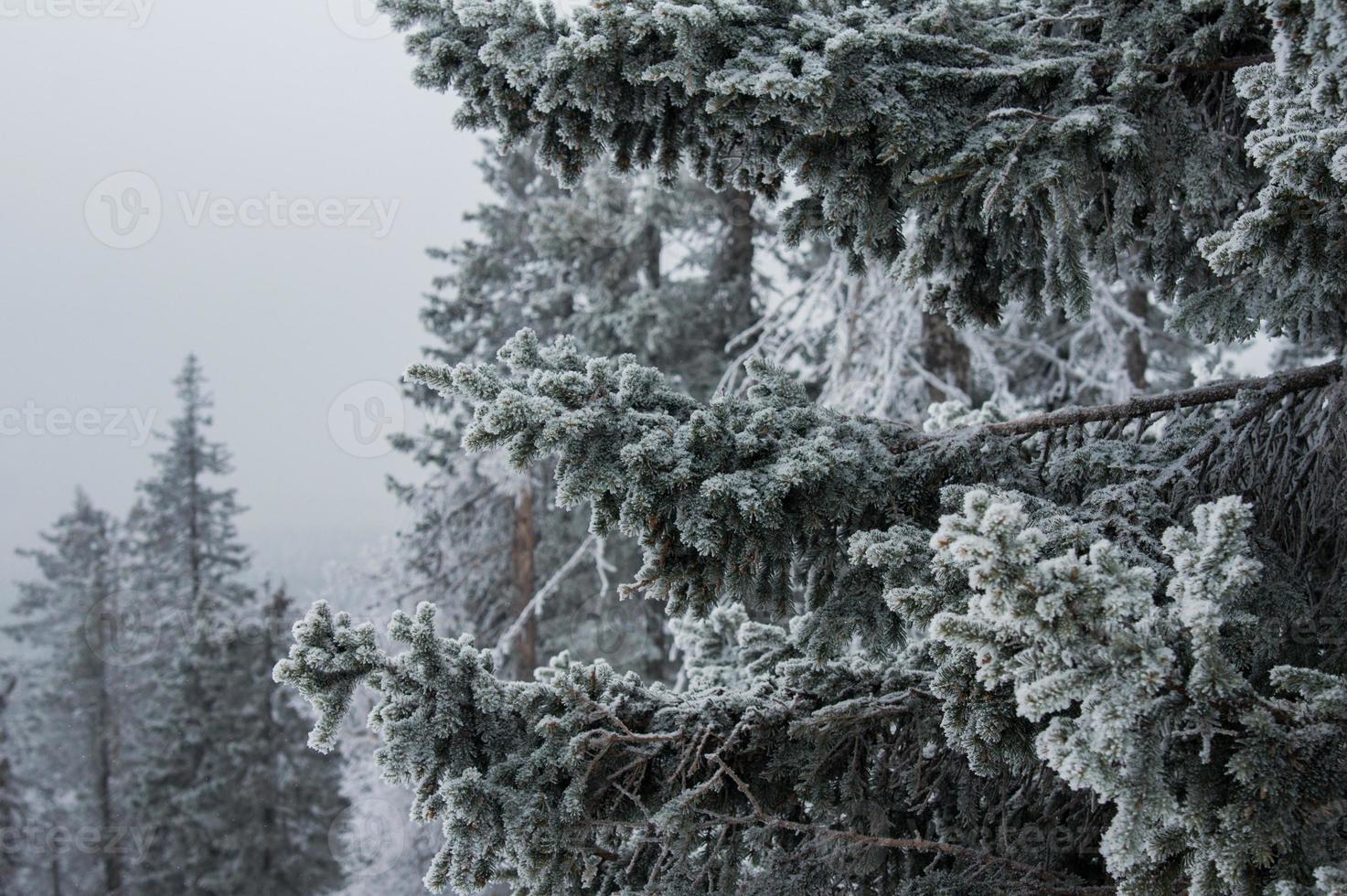 forêt enneigée sur les pentes de la montagne. photo