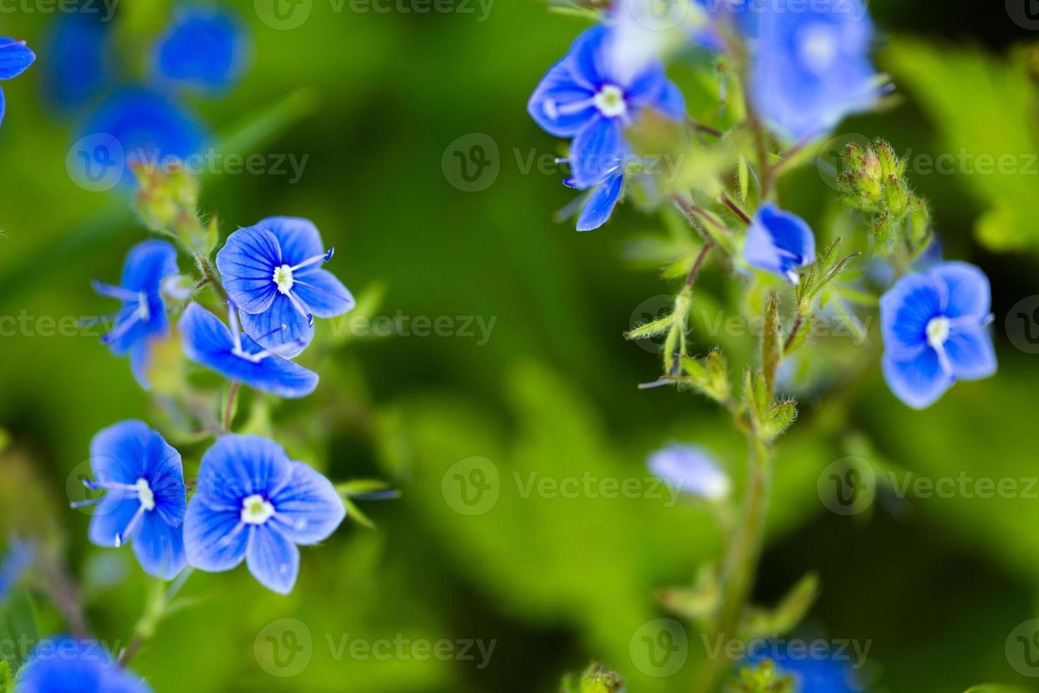 fleur sauvage photo