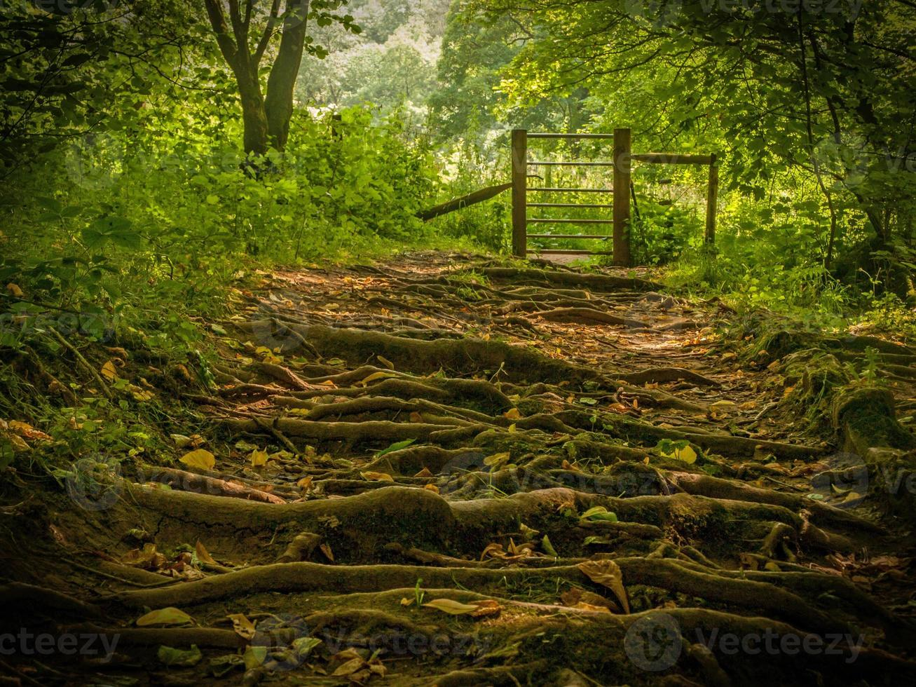 promenade dans les bois photo