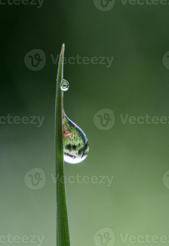 Gouttes d'eau du matin sur une herbe laisse photo