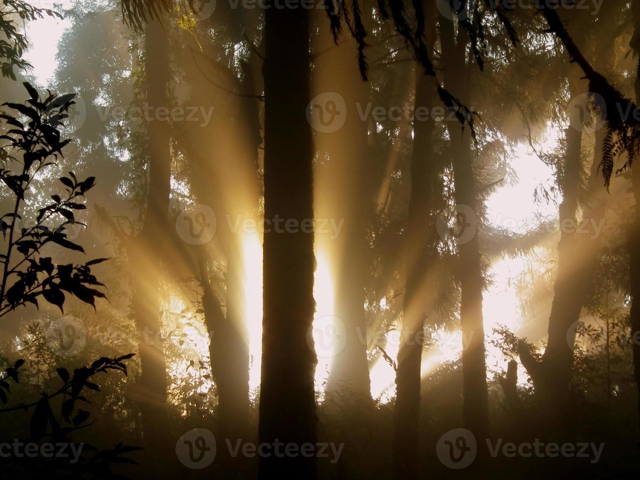 rayons de soleil dorés photo