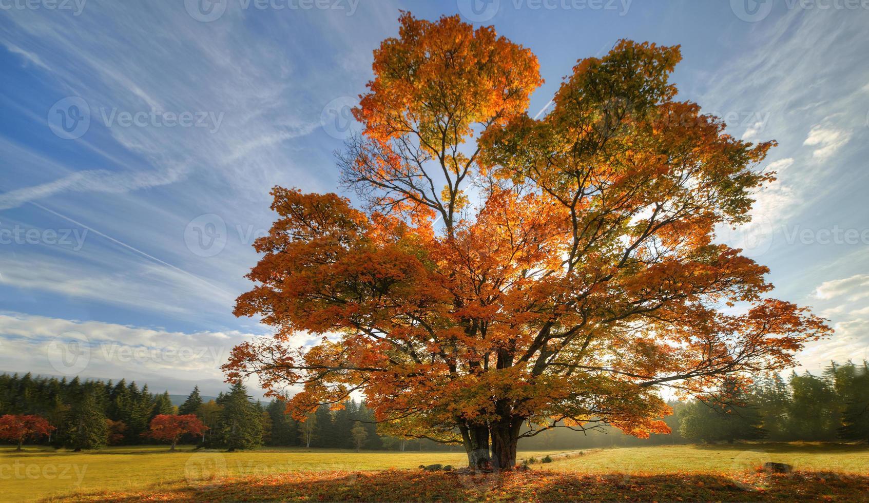 Grand chêne d'automne et herbe verte sur un pré photo
