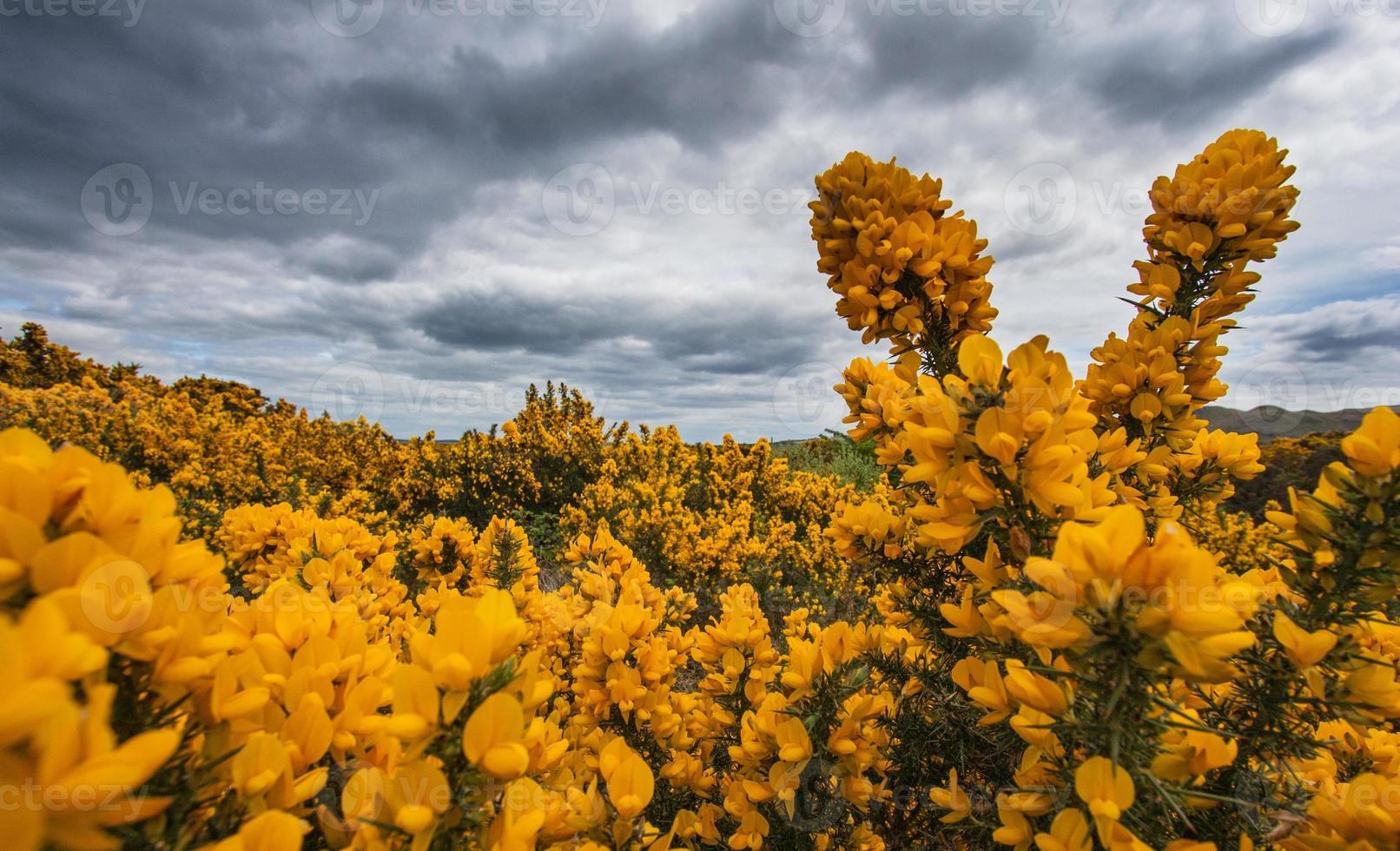 Irlande photo