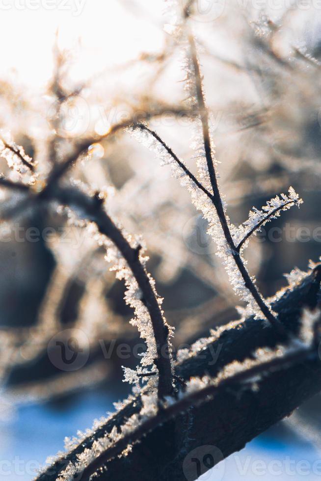 Branches d'arbres dans le givre l'hiver sur un fond soleil photo