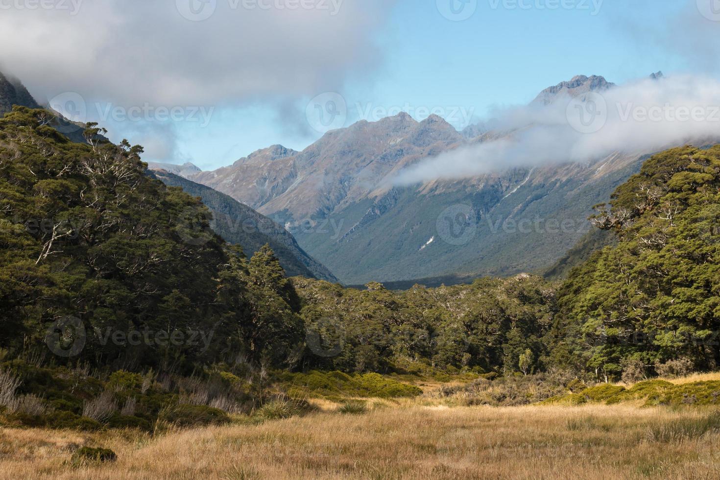 Greenstone Valley dans le parc national du fiordland photo