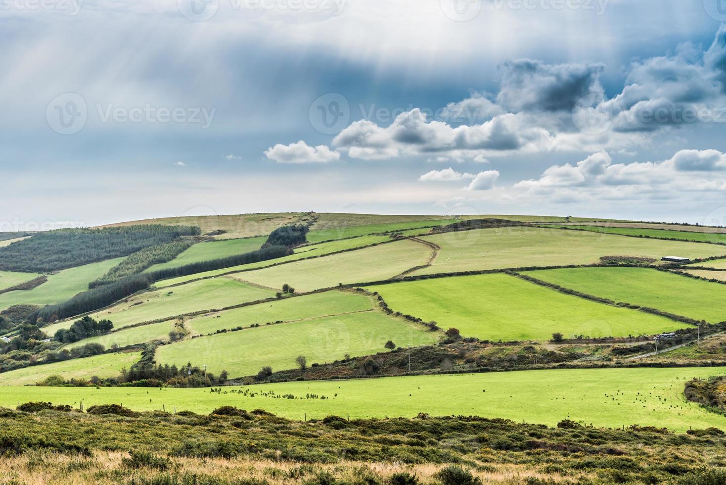 prairies irlandaises photo