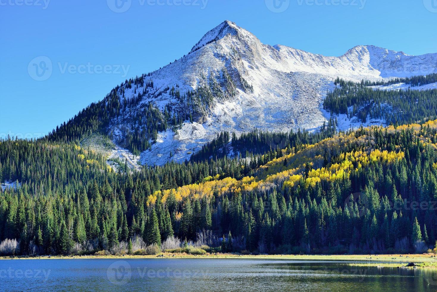 tremble jaune et vert et montagnes couvertes de neige photo