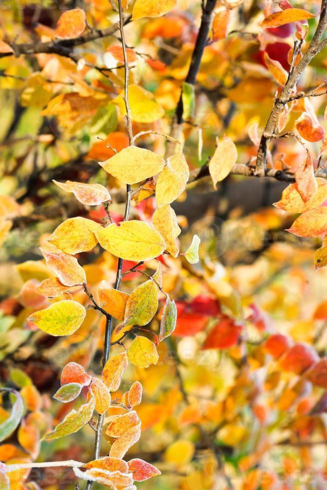 feuilles jaunes, rouges et oranges congelées en automne ensoleillé photo