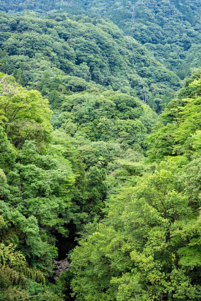 paysage de la vallée de hakone photo