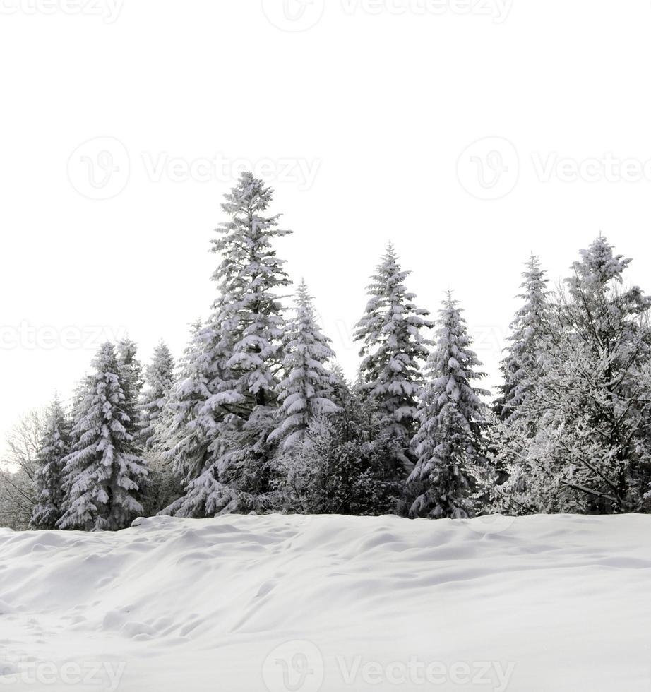 groupe d'arbres photo