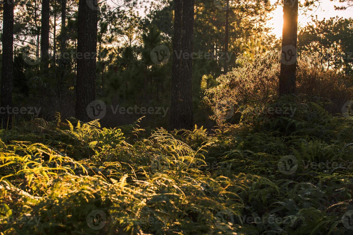 des rayons de soleil traversent les feuilles d'automne photo