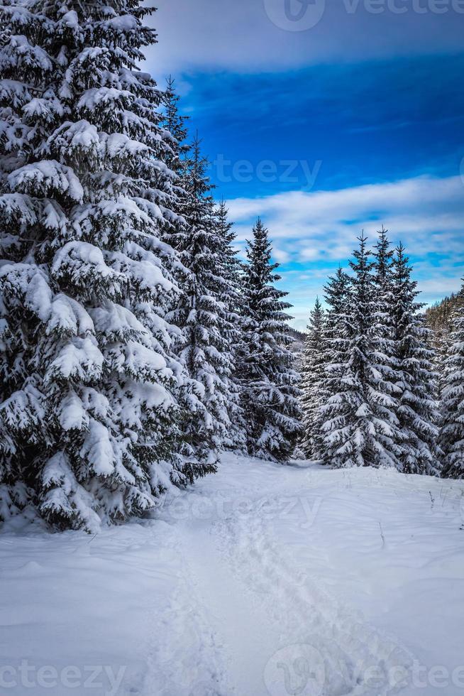 sentier de montagne d'hiver dans les bois photo