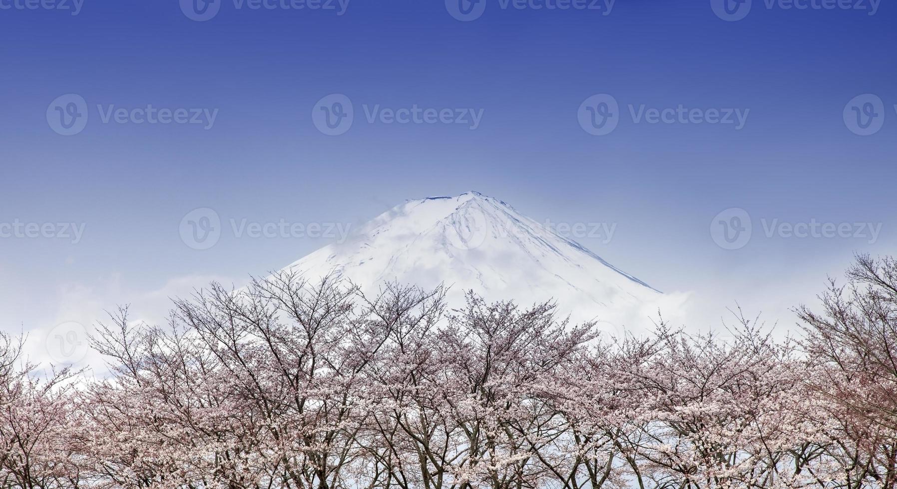 Mont Fuji et arbres de fleurs de cerisier rose au printemps, Japon photo
