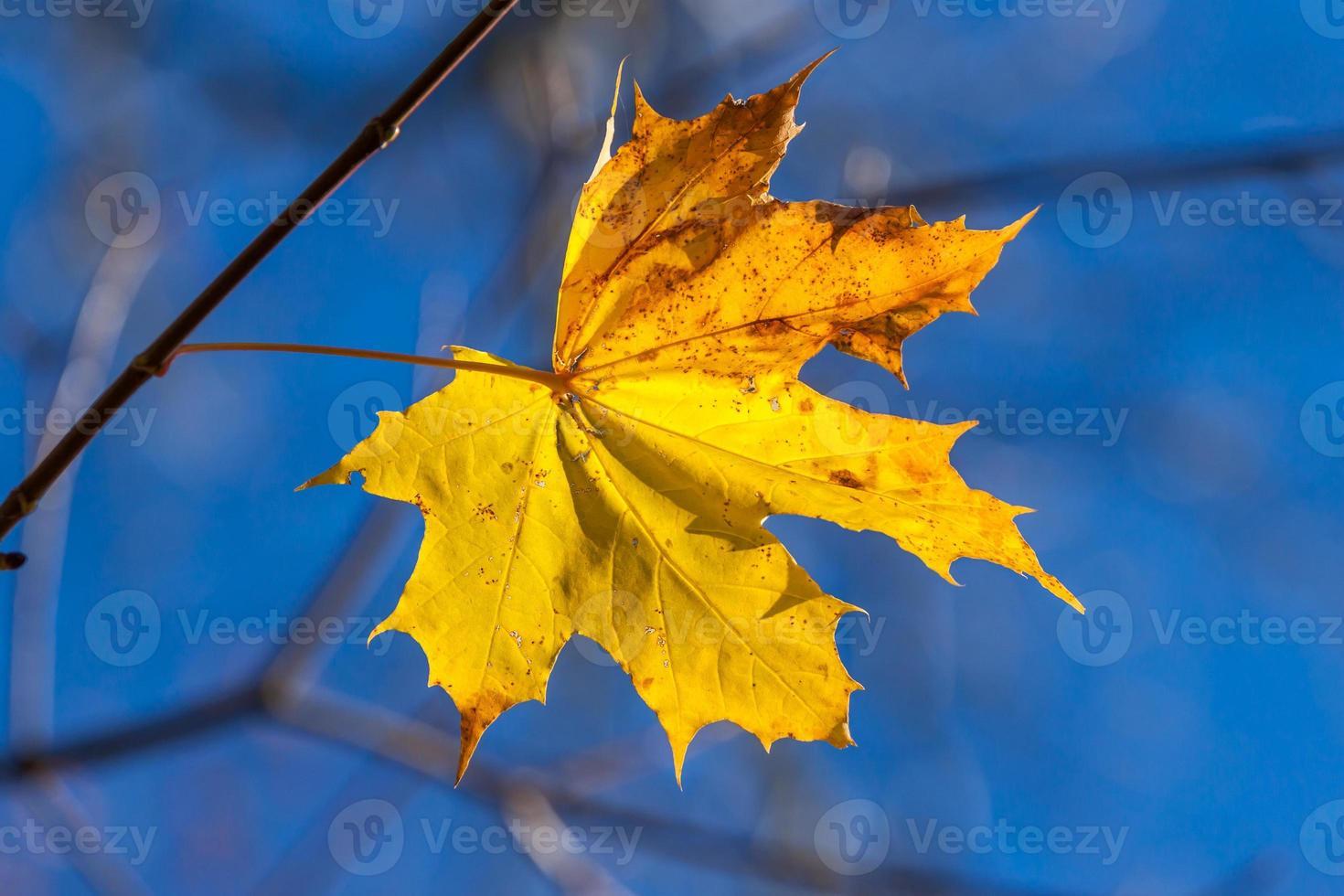 feuille d'érable jaune unique d'automne photo