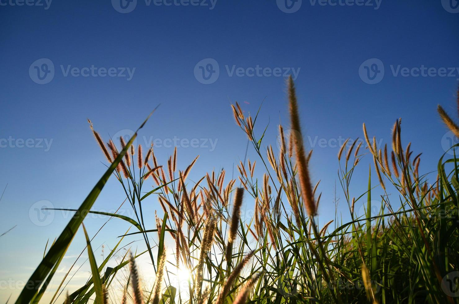 champs d'herbe sur la montagne photo