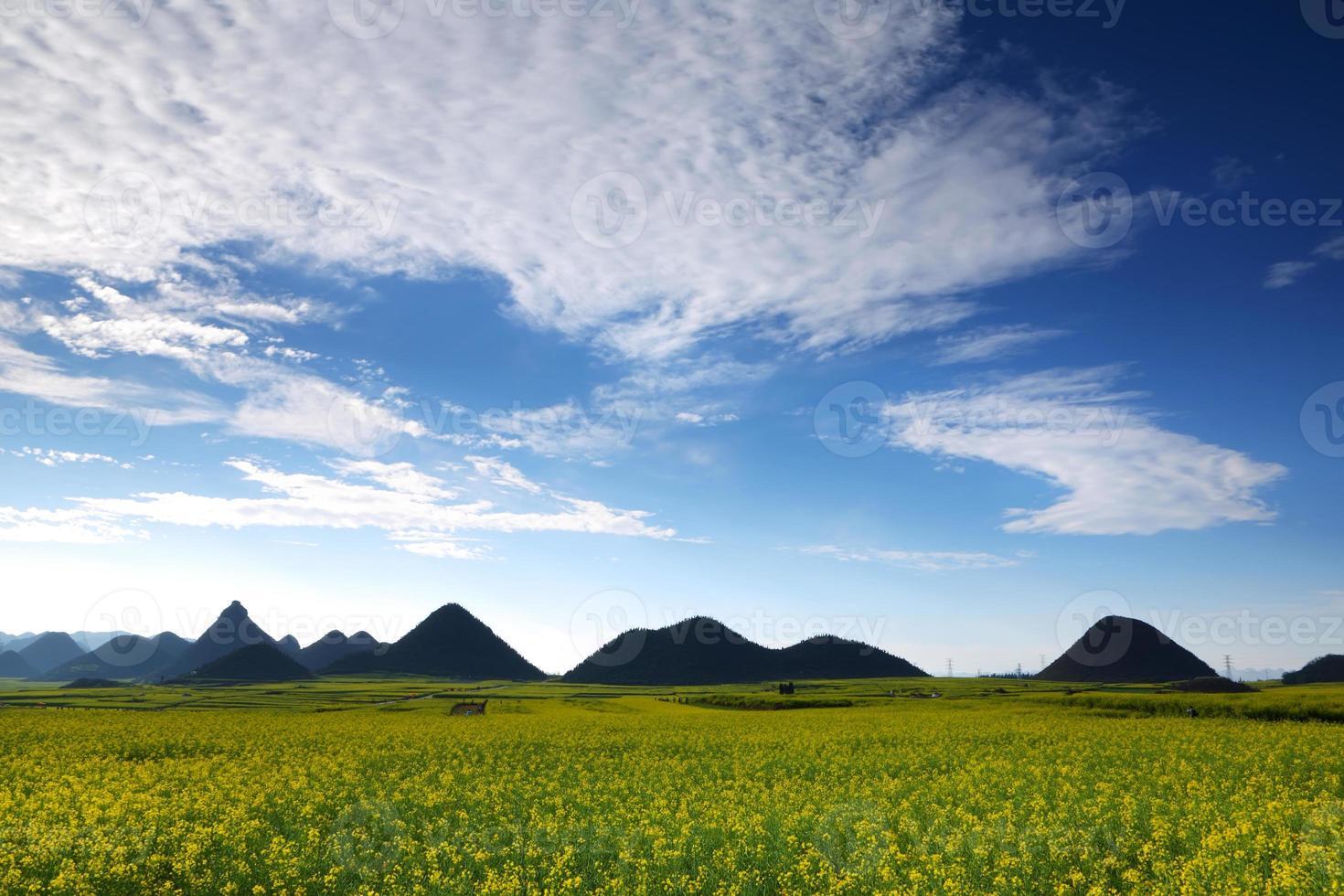 Champ de colza avec montagne, Chine photo