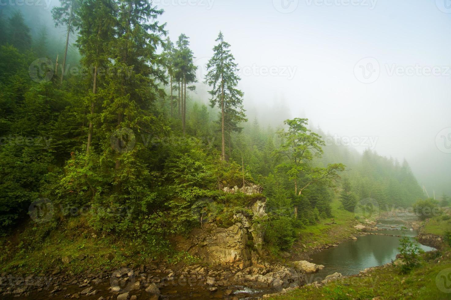 beaux pins sur les montagnes photo