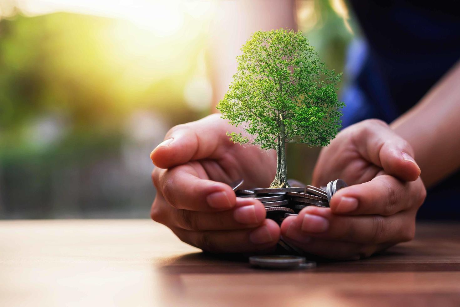 planter des cultures sur un tas de pièces photo