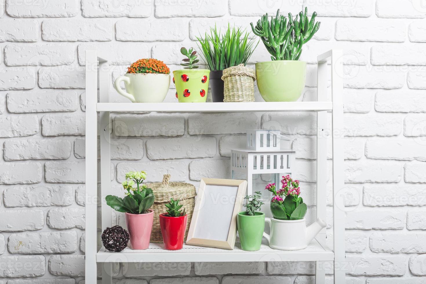 collection de plantes succulentes photo