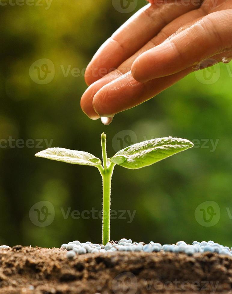 faire pousser des plantes photo