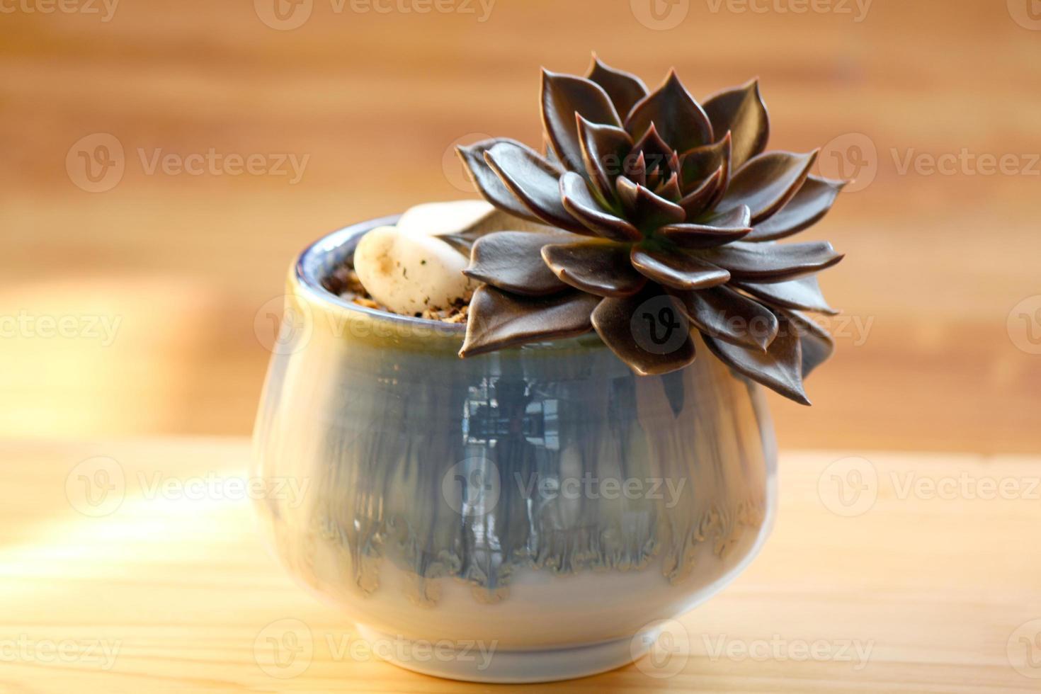 plante d'intérieur saine photo