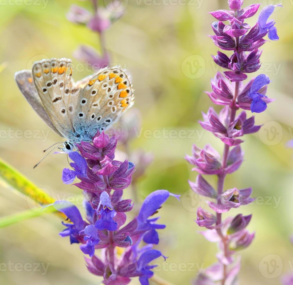 papillon sur la conception de la fleur rose photo