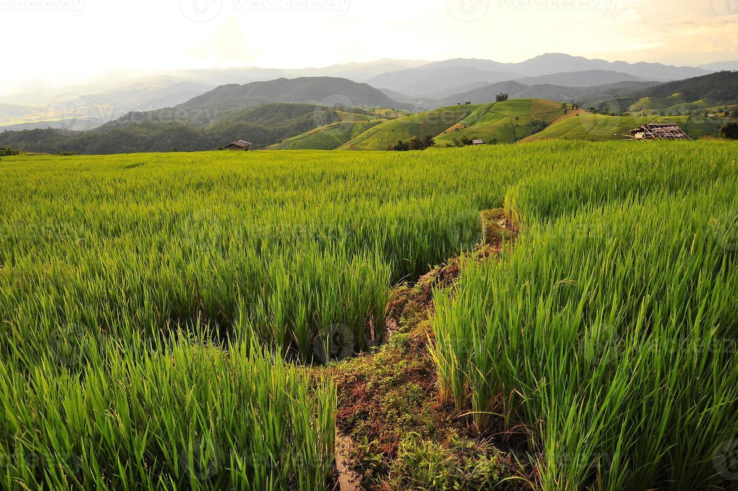 rizières au coucher du soleil photo