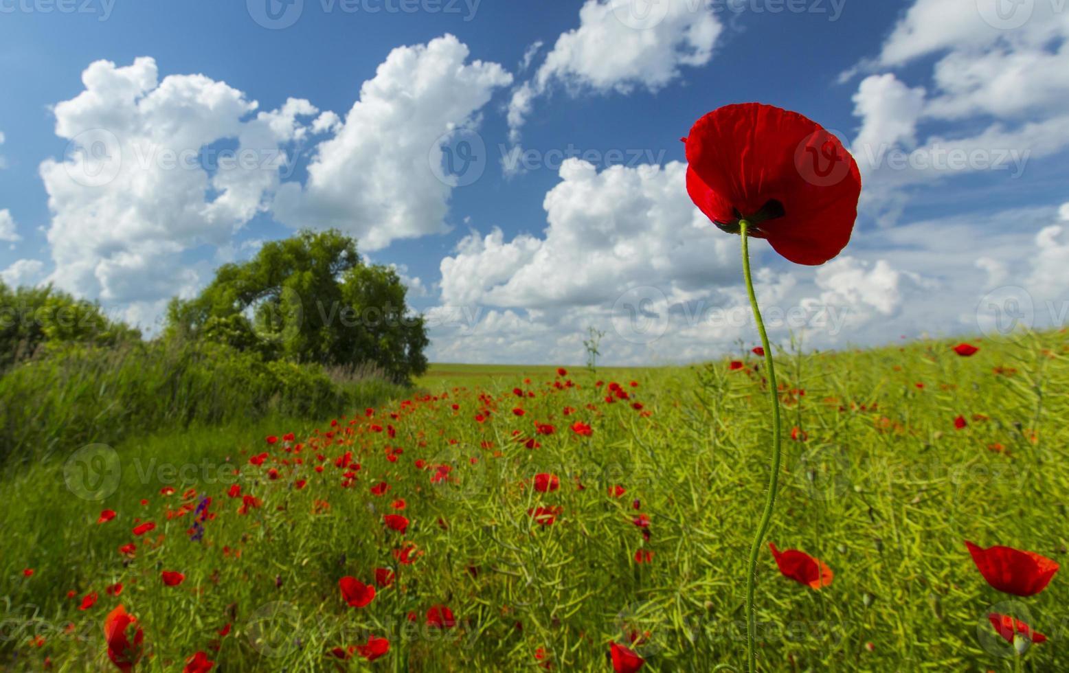 beaux champs ruraux en été photo