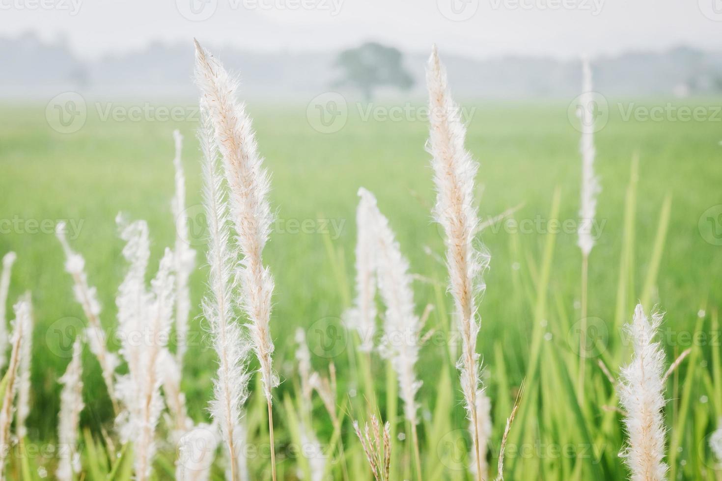 Close up de fleurs sauvages et de plantes dans un champ ensoleillé photo