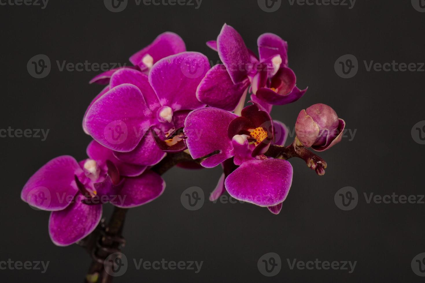 orchidées photo