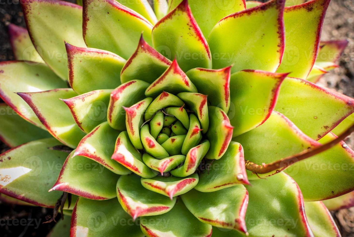 cactus cerclé rouge photo