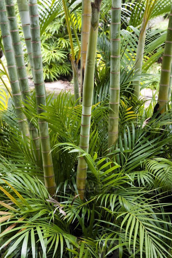 jardin de bambou photo
