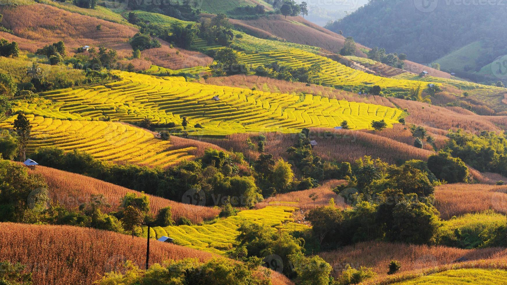 Rizière en terrasses dans le village de mae-jam photo