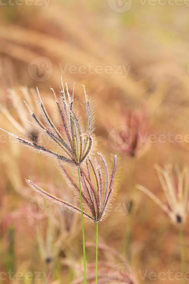 herbe dans le vent photo