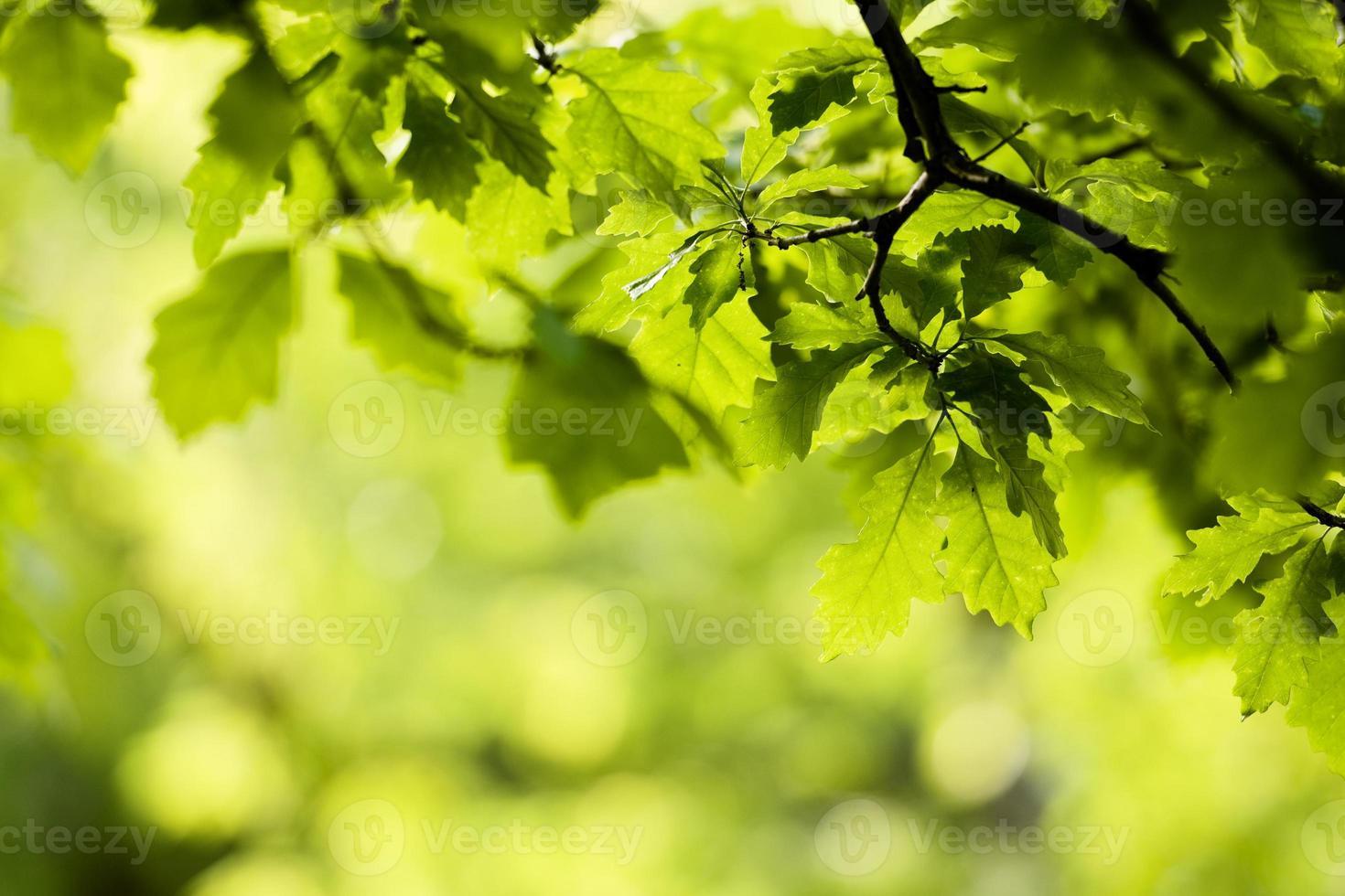 fond de feuilles de printemps photo