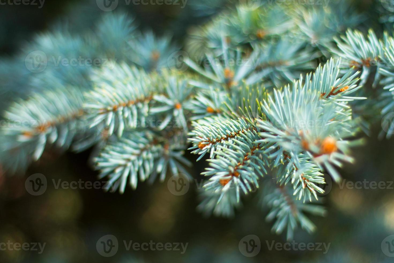 feuilles d'arbre photo