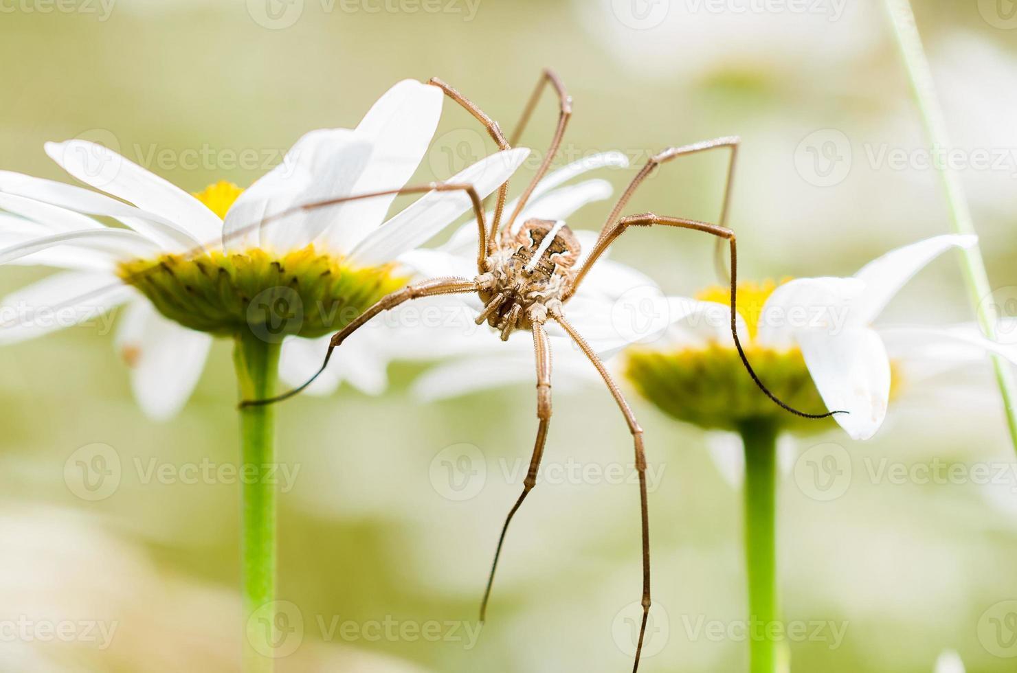 araignée et fleur photo