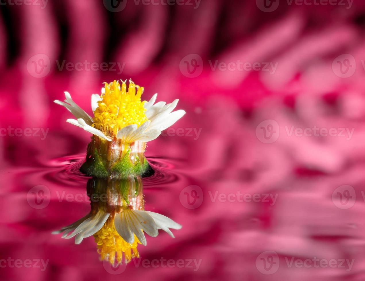 fleur blanche se reflétant dans l'eau photo