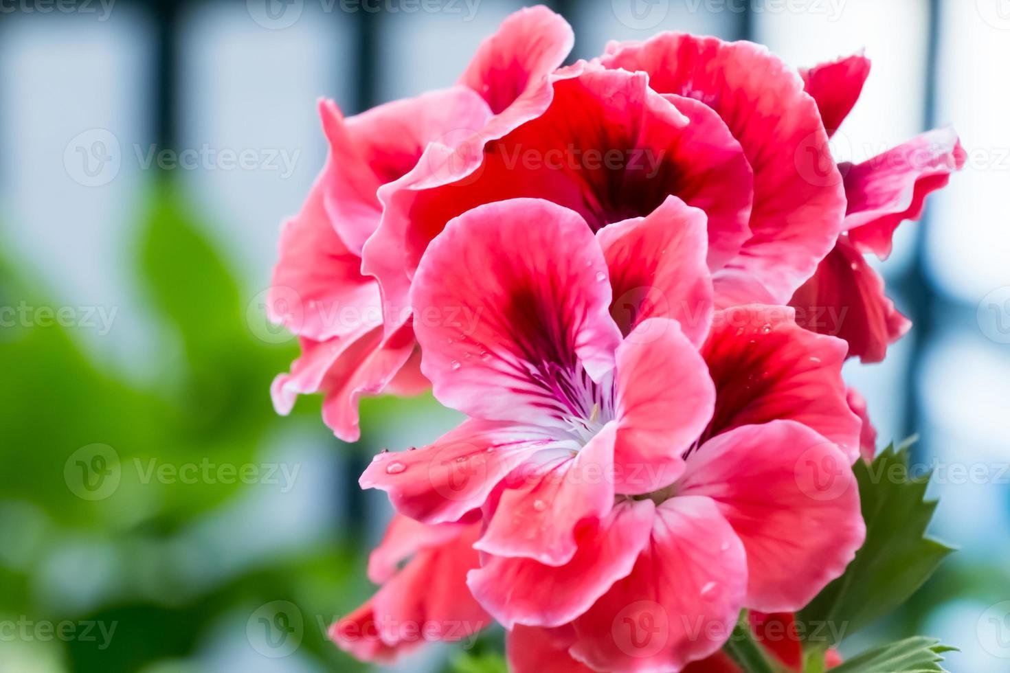 fleurs rouges douces photo
