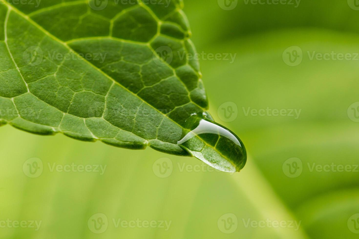 plomb vert avec goutte close up photo