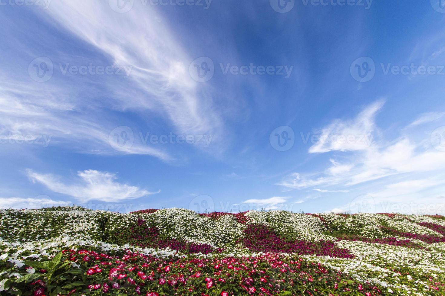 champ de fleurs avec un ciel bleu photo