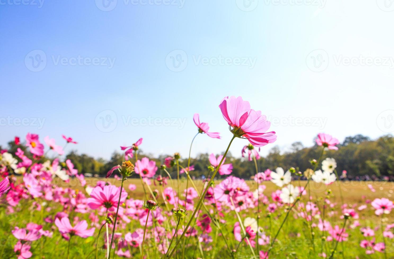 belle fleur de printemps avec un ciel bleu photo
