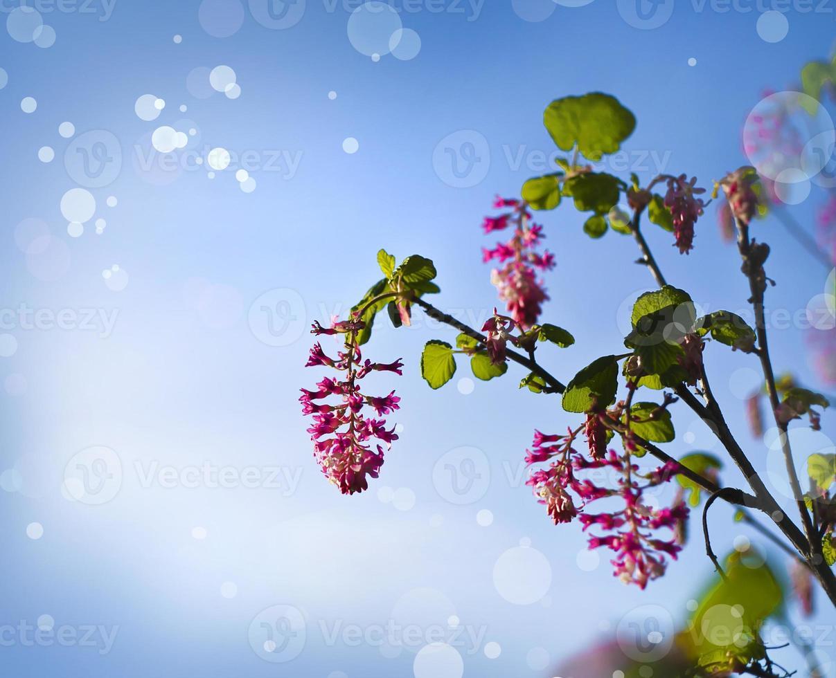 petites fleurs roses de printemps en face du ciel photo