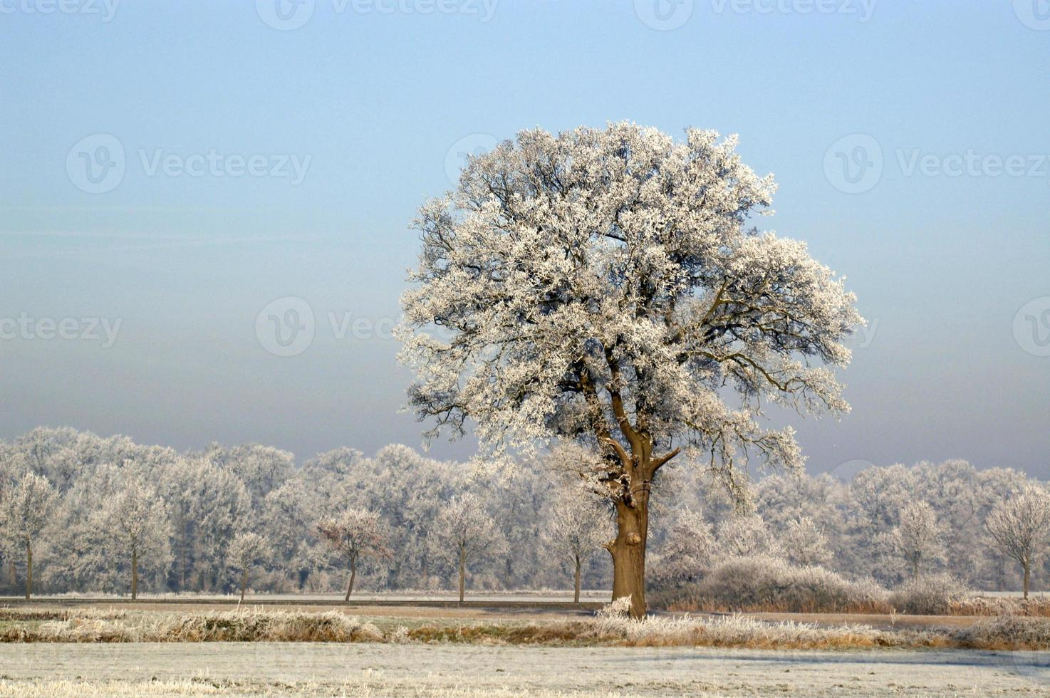 arbres gelés avec un ciel bleu photo