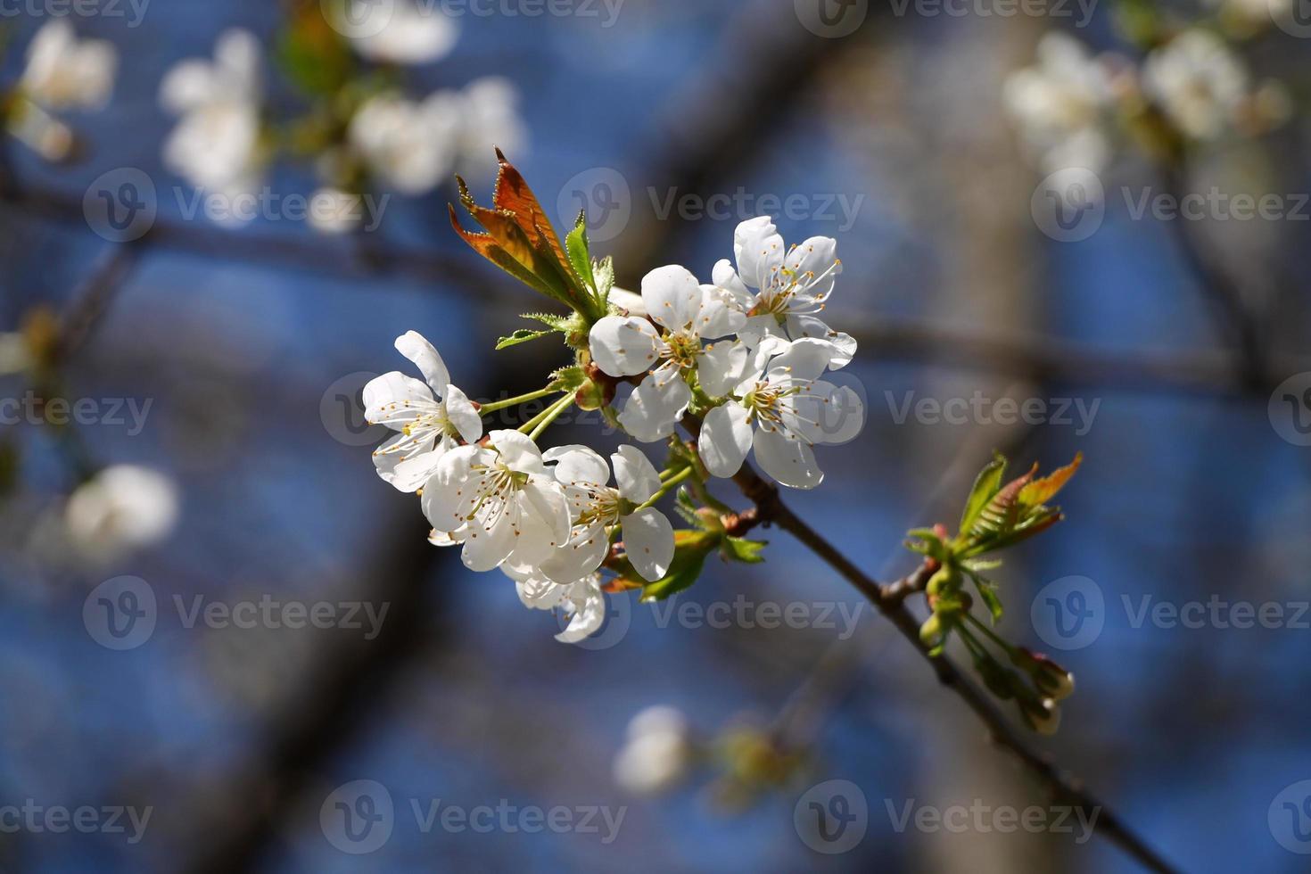 fleur de printemps avec un ciel bleu en arrière-plan photo