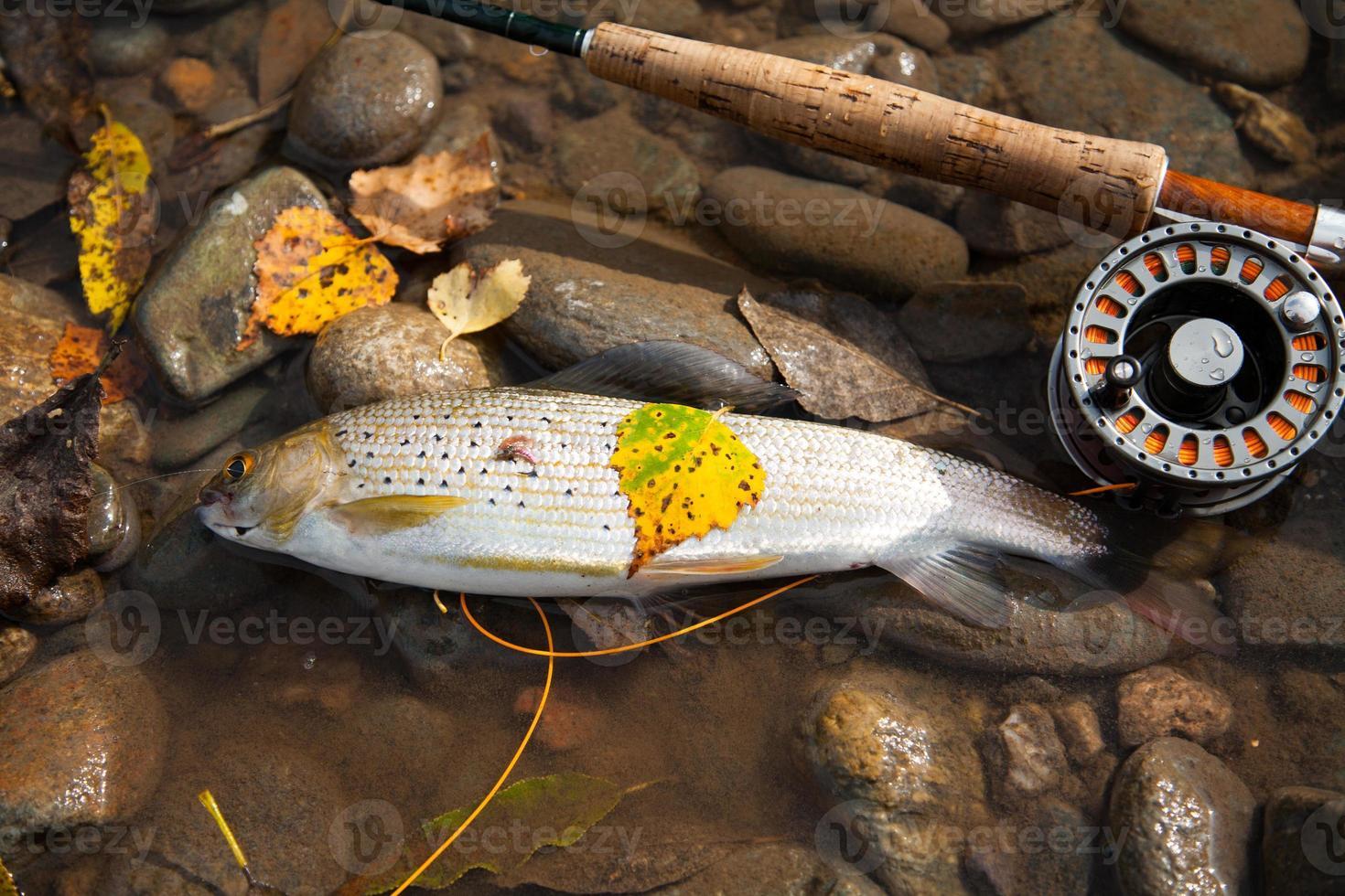 pêche à la mouche photo