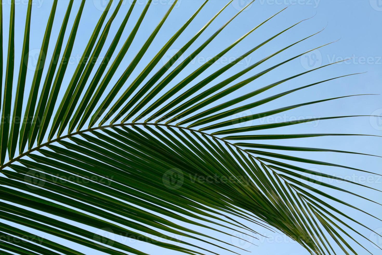 palmiers à feuilles photo